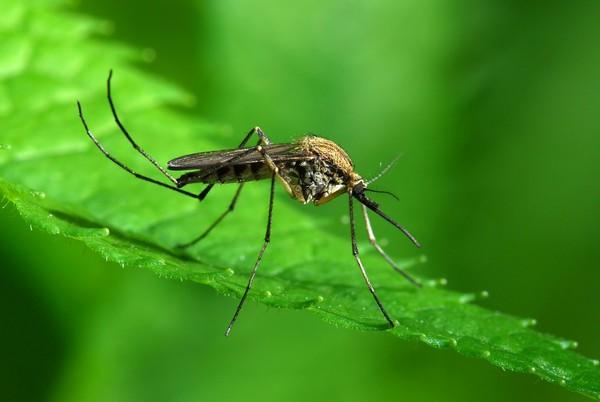 Средство от комаров в лесу