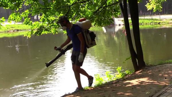 Можно обработать водоем, расположенный неподалеку, инсектицидами – это должно помочь сократить количество насекомых на участке
