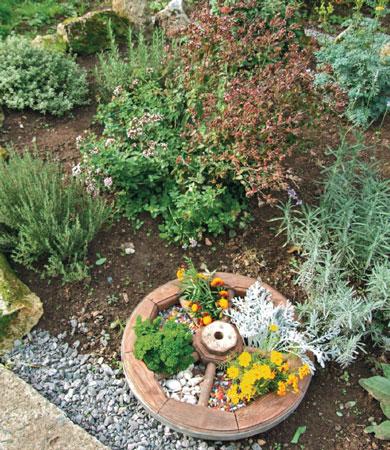 Перечень ароматных пряных трав которые можно вырастить на огороде
