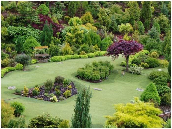 большие среднерослые хвойные растения в ландшафтном оформлении дачного участка
