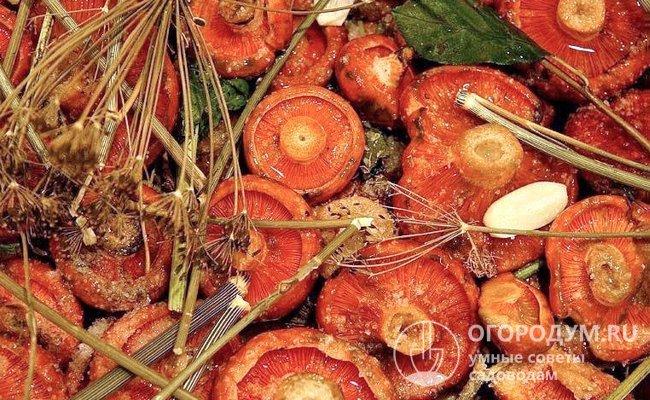 Чтобы грибы просаливались равномерно, желательно брать схожие по размерам