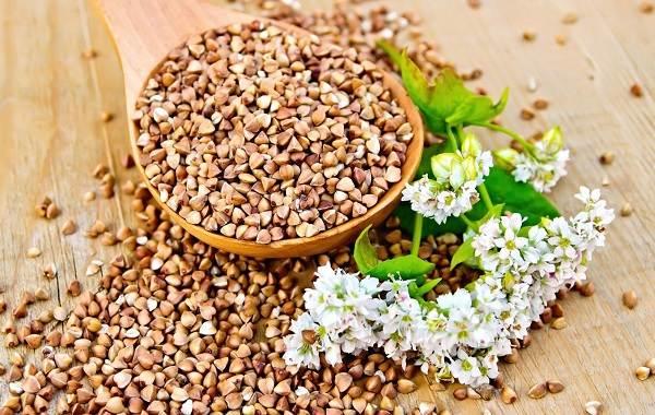 Гречиха-растение-Описание-особенности-виды-сорта-выращивание-и-свойства-гречихи-13