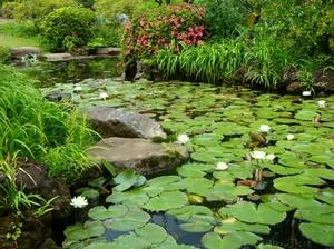 Растения водоема